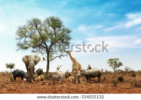 Conceptual image of common African safari wildlife animals meeting together around a tree in Kruger National Park Royalty-Free Stock Photo #554035132