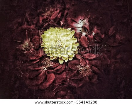 grunge flower background and texture  #554143288