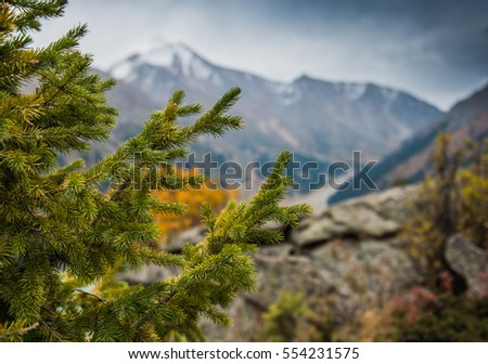 Nature background of sunny pine tree  #554231575