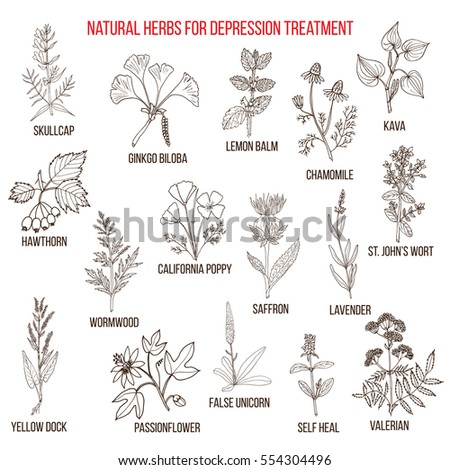 Best herbal remedies for depression. Hand drawn vector set of medicinal plants #554304496