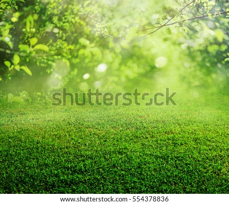 spring grass background Royalty-Free Stock Photo #554378836