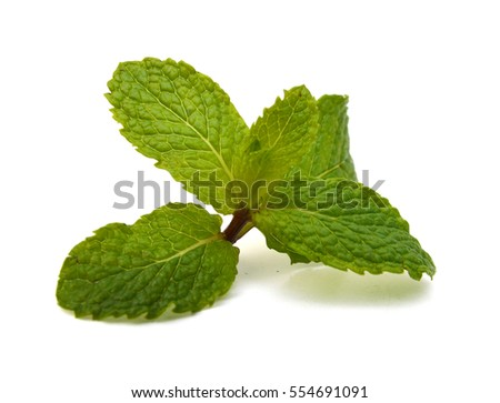 fresh mint leaves isolated on white background. Studio macro #554691091