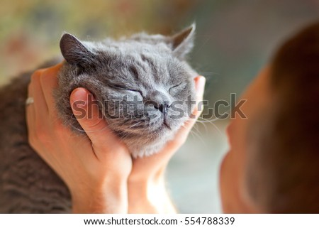 Man embracing British cat that blinks with pleasure. British cat and man - love and affection. #554788339