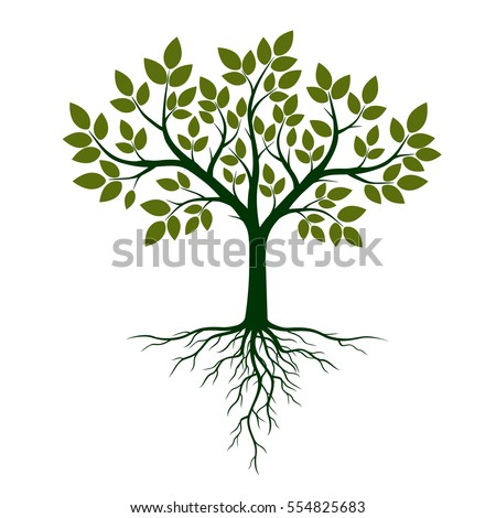 Green Tree with Roots. Vector Illustration. Royalty-Free Stock Photo #554825683