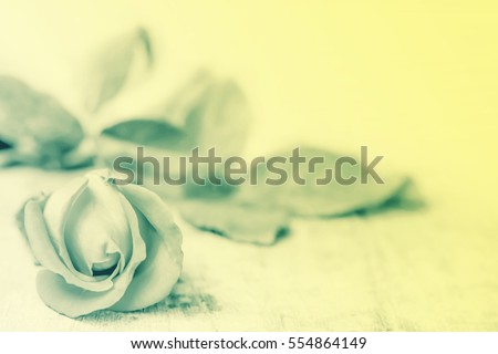 Valentine rose flower in vintage style #554864149