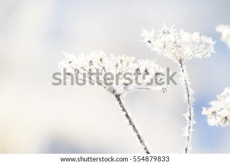 winter grass #554879833