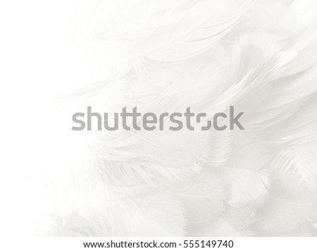 white feather texture background