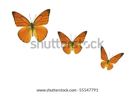 a few butterflies isolated with white background #55547791