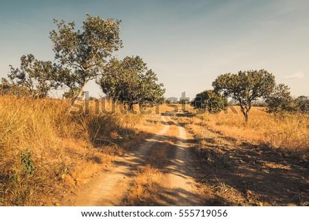 Dirt road in the savanna field, retro color #555719056