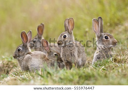 A group of wild rabbits sitting outside their warren in New Zealand
