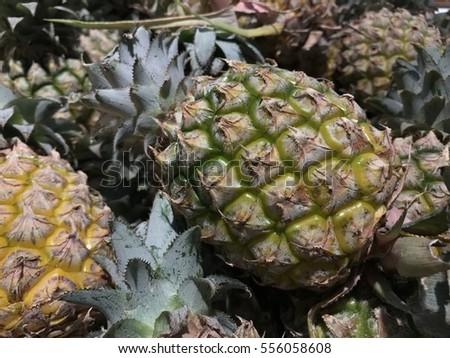 Pineapples  #556058608