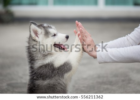 Give me five -Puppy pressing his paw against a Girl hand Royalty-Free Stock Photo #556211362