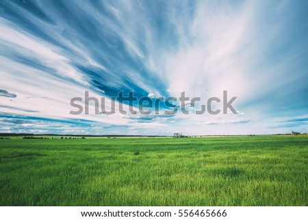 Green Field In Spring Season. Agricultural Rural Landscape At Evening. Copy Space On Sunny Blue Sky Background. Royalty-Free Stock Photo #556465666