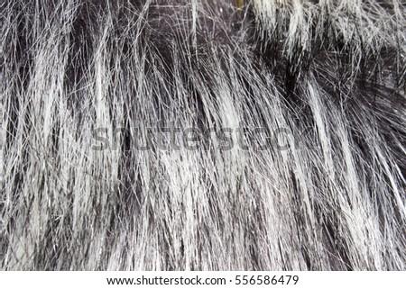 fur collar #556586479