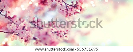 Spring border or background art with pink blossom. Beautiful nature scene with blooming tree and sun flare. Easter Sunny day. Spring flowers. Beautiful Orchard Abstract blurred background. Springtime #556751695