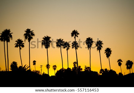 Sunset palm trees in Los Angeles, California