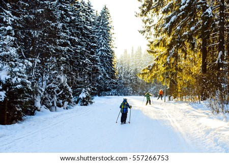 Children ride on skis in the winter woods #557266753