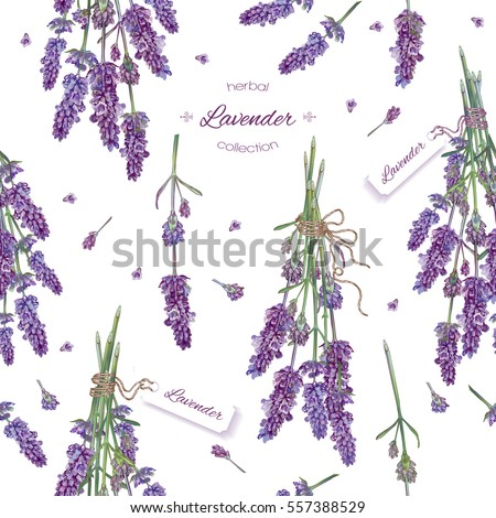 Vector lavender flower seamless pattern. Background design for natural cosmetics, beauty store, health care products, perfume, essential oil. Can be used as wedding background. Best for wrapping paper #557388529