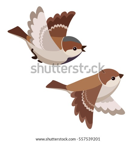 Vector illustration of two cartoon flying sparrows isolated on white background
