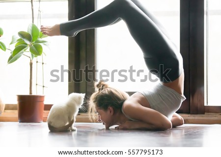 Young attractive smiling woman practicing yoga, stretching in Scorpion exercise, variation of vrischikasana pose, working out, wearing sportswear, grey pants, bra, indoor full length, home interior #557795173