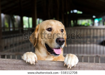 Brown dog stood and wait over the cage  #558112708