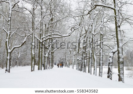 The natural landscape in the forest when the trees are in the snow. #558343582