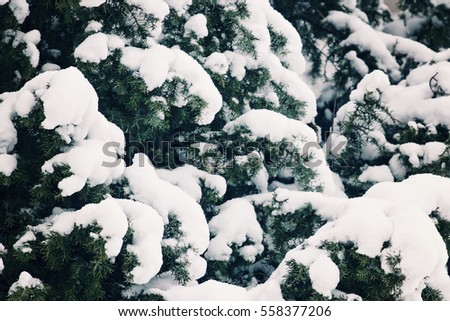 Winter tree covered with snow as background. Close up #558377206