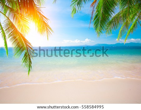Palm and tropical beach #558584995