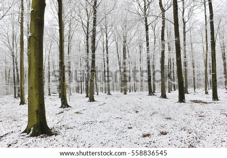 winter forest #558836545