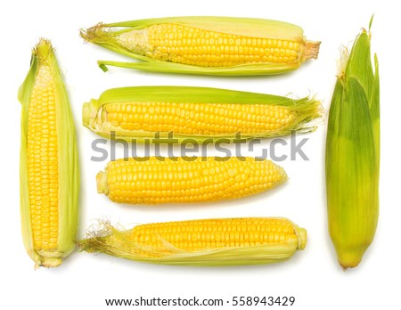 Corn with skin or without skin isolated on white background. A collection of corn. Top view, flat #558943429