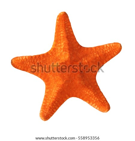 red starfish isolated on white background Royalty-Free Stock Photo #558953356