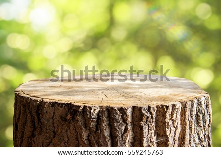 Empty tree trunk for display montags #559245763