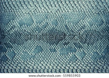 Snake skin background. Close up. #559855903