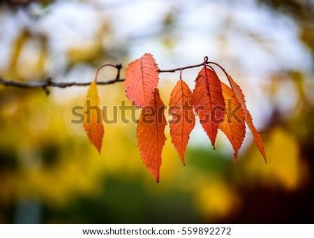 Autumn leaves #559892272
