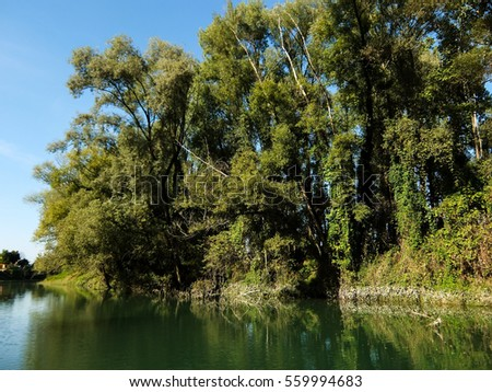 Photo Picture of Beautiful  Wild Brenta River in North Italy  #559994683