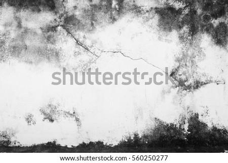 White Grunge Wall Background. #560250277