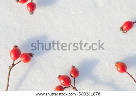 Winter snow background decorated with rose hip berries arranged red berries on snow #560261878