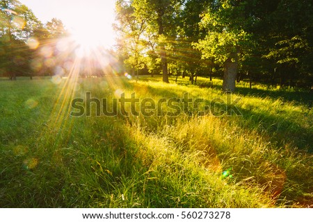 Sunset Or Sunrise In Forest Landscape. Sun Sunshine With Natural Sunlight And Sun Rays Through Woods Trees In Summer Forest. Beautiful Scenic View. Natural Real Lens Flare Effect Royalty-Free Stock Photo #560273278