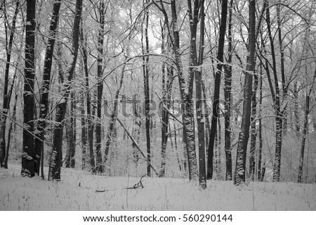 Foggy winter morning #560290144