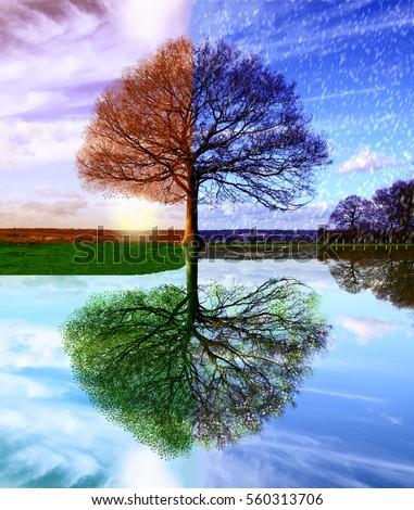 Four seasons Royalty-Free Stock Photo #560313706
