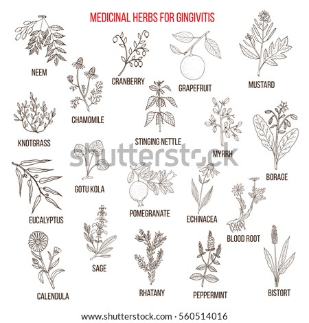 Best herbal remedies for gingivitis. Hand drawn vector set of medicinal plants #560514016
