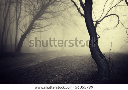 old looking photo of a path through a forest with fog at morning