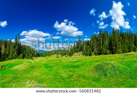 Valley in the alpine coniferous forest. Summer day. Green lawn. Blue sky with clouds. Summer landscape. #560831482