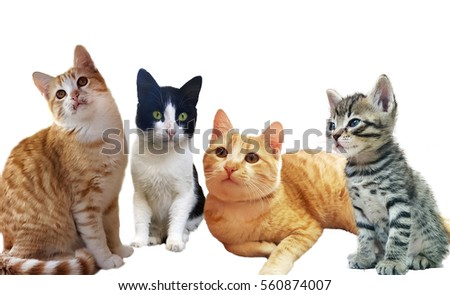 Group of cats in front of a white background #560874007
