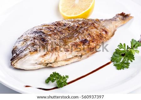 fish  #560937397