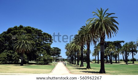 Catani Gardens in St Kilda, Melbourne, Australia. Beautiful footpath lined with palm trees.  #560962267