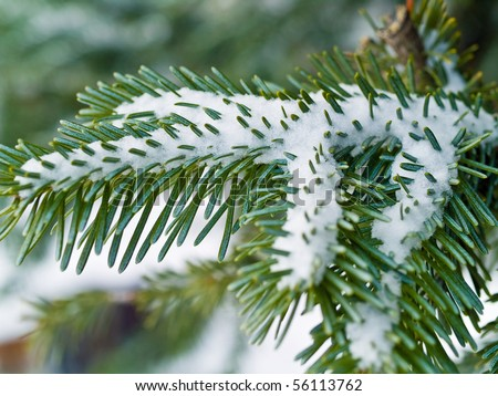 Snow Covered Pine Tree Branches Close Up Royalty-Free Stock Photo #56113762