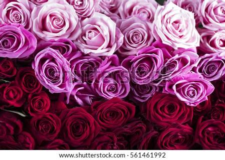 Valentines day #561461992