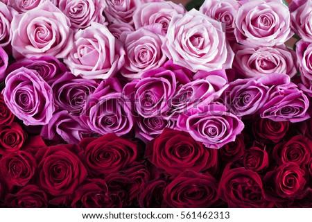Valentines day #561462313