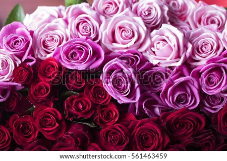 Valentines day present. Gifts and roses background concept. #561463459